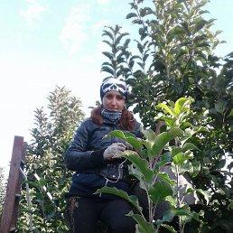 Маша, 27 лет, Самбор