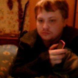Сергей, 29 лет, Пошехонье