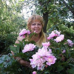 ольга, 59 лет, Пологи