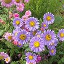 Цветы в уютном дворе у Мамы !