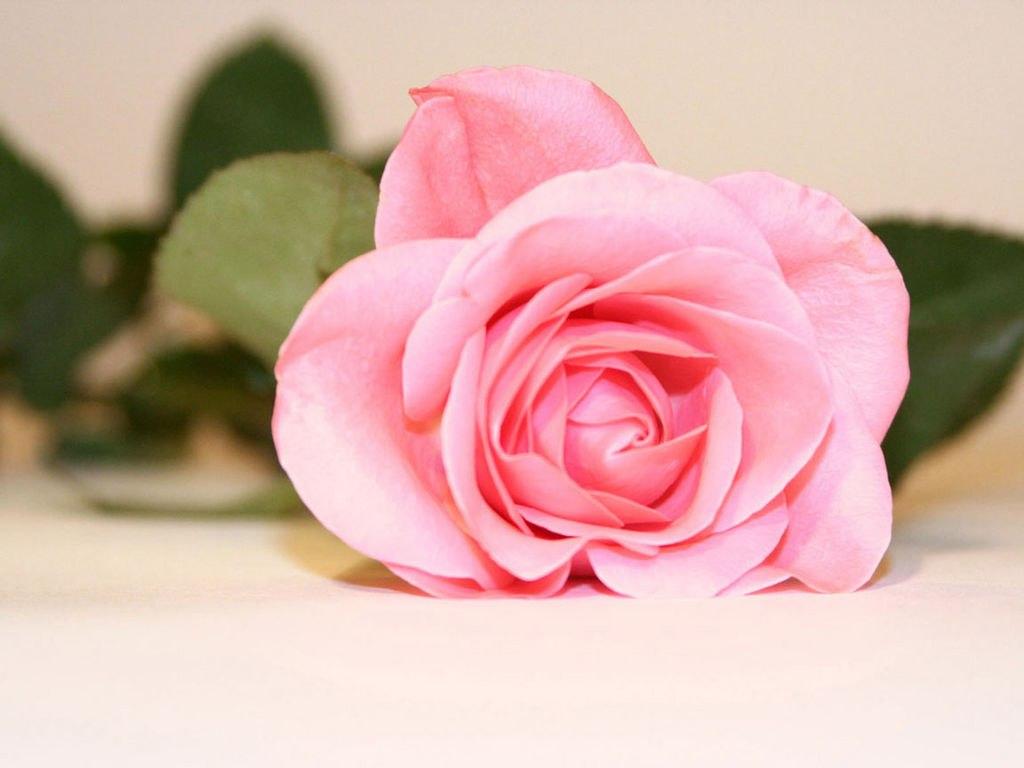 часы картинки цветы со стихами имя роза кто звезд отечественной