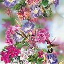 Фото Farida, Ижевск - добавлено 14 августа 2014 в альбом «красивые птицы»