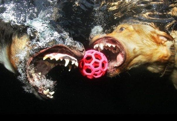 Уморительные морды ныряющих собак - 2