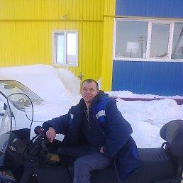 Николай, 37 лет, Завьялово
