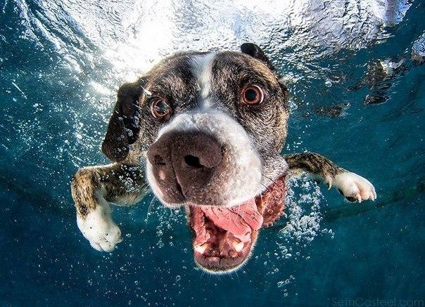 Уморительные морды ныряющих собак