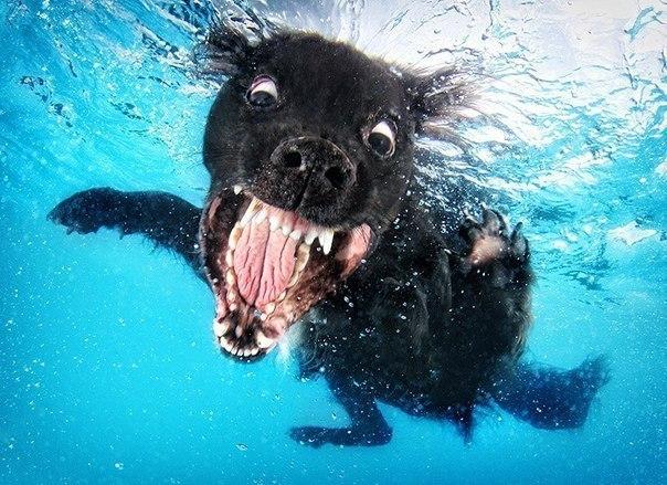 Уморительные морды ныряющих собак - 3