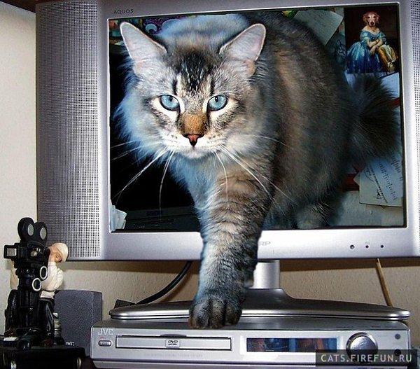 Я хочу к тебе в гости открытка, котов
