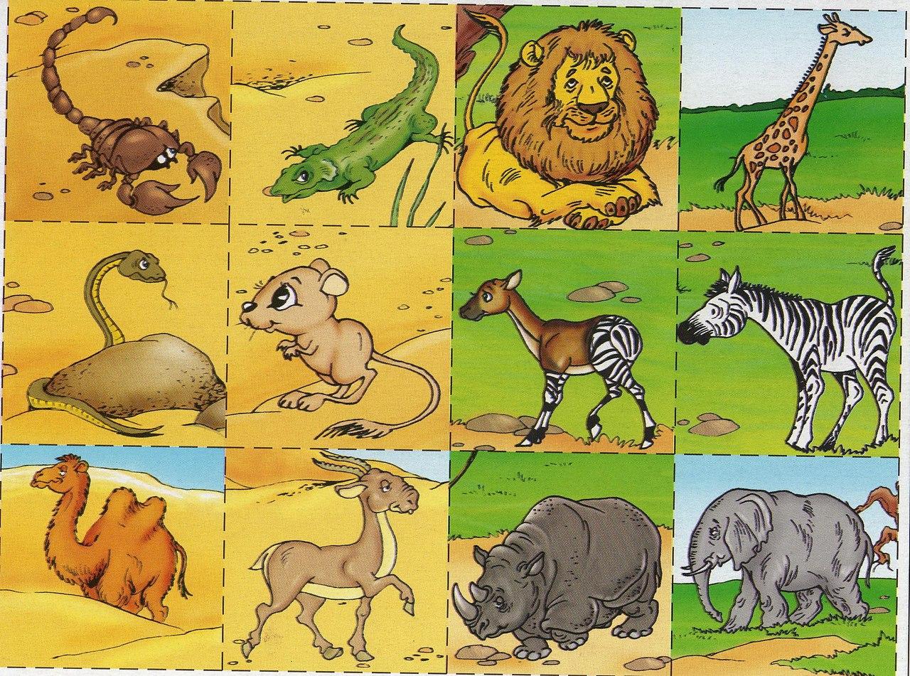 радиатор сюжетная картинка животные жарких стран согласны