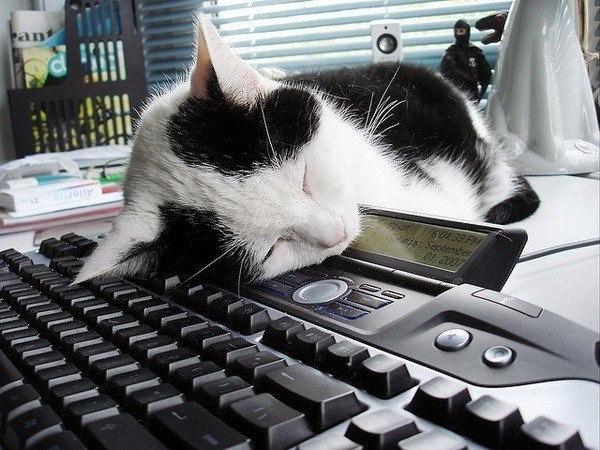 Котейки с клавиатурами - 2