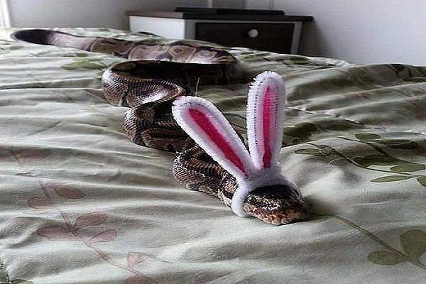 змея с ушами зайца картинка спектр, как