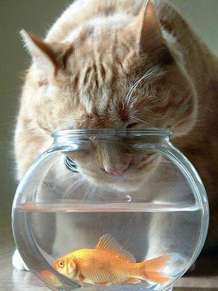 Картинки смешные золотая рыбка