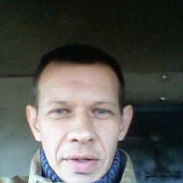 Саша, 41 год, Сольцы