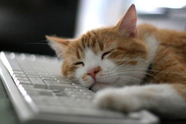 Котейки с клавиатурами