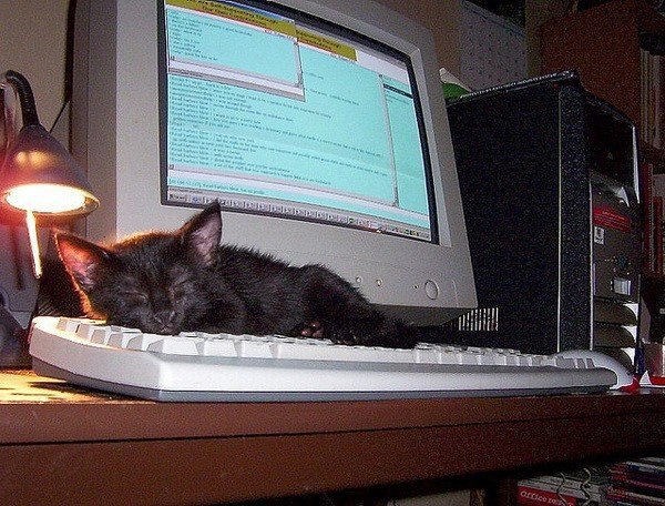 Котейки с клавиатурами - 3