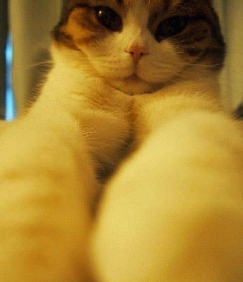 Кошачьи селфи :) - 3