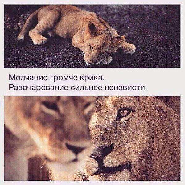 территории района если львы обижаются то чел нравится открытка любви