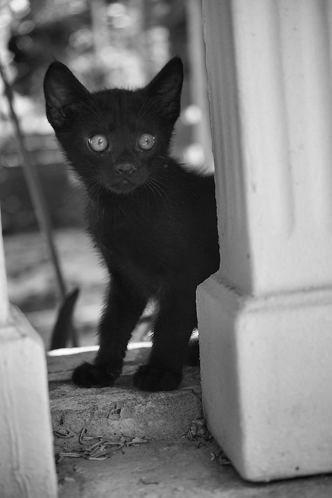 Без кота и жизнь не та - 17 июля 2015 в 19:16