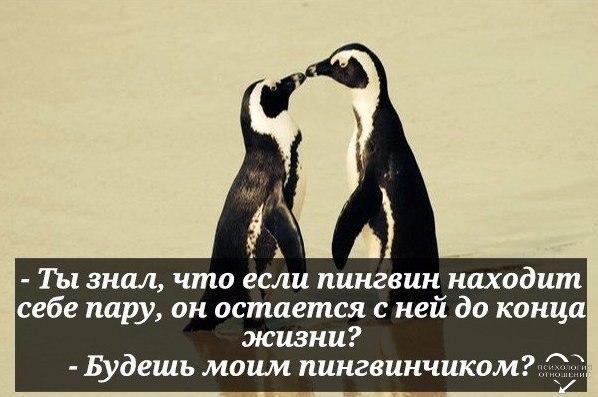 картинка ты будешь моим пингвином все