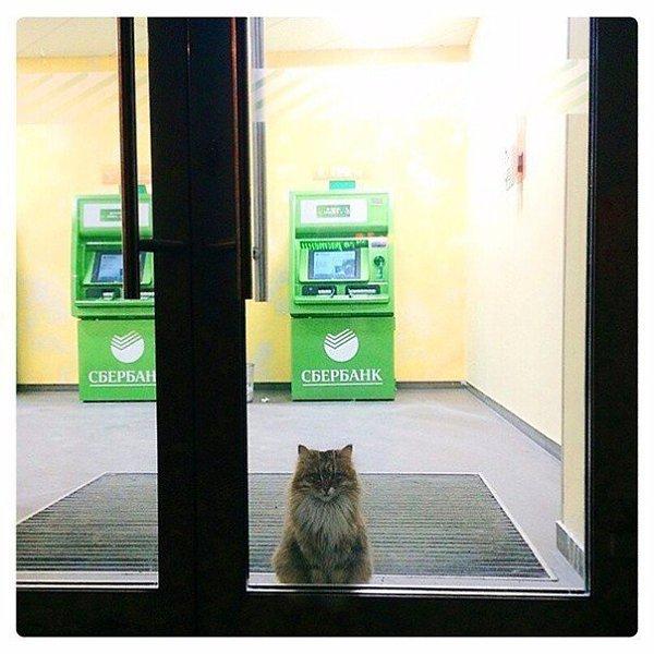 Прикольные картинки при входе в сбербанк