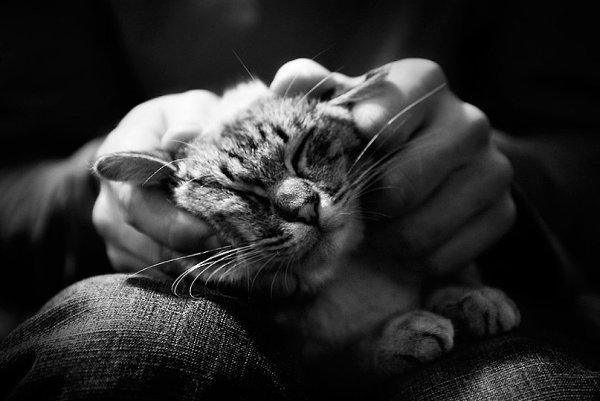 Баллада о Кошке.А помнишь как,кошка,всё начиналось- Тебя подобрал я с холодной земли. Лежала уж ...