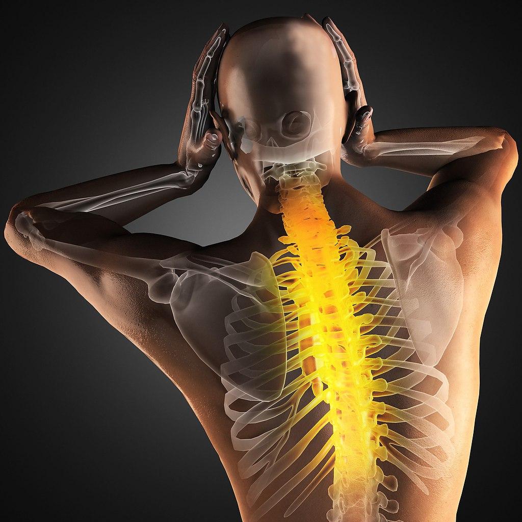 реалити-шоу фото мышц спины фото нерф фото позвоночника начальника, как наш