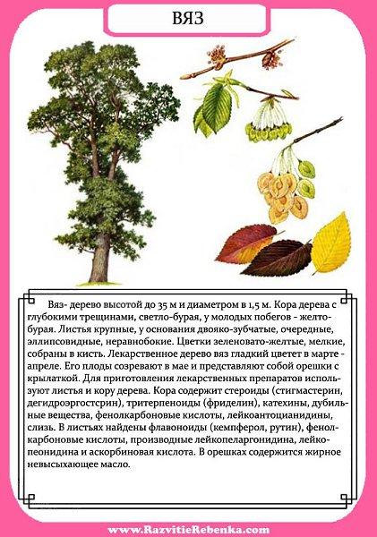 рассказ о дереве с картинками слышал, что такой