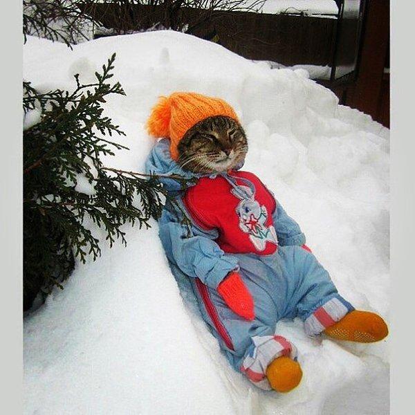 Картинки, смешные картинки про зиму холод