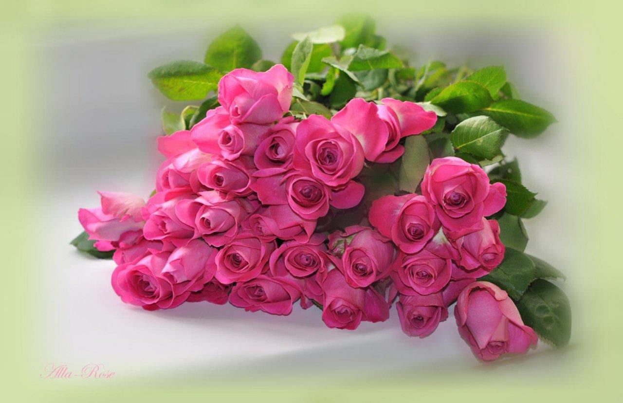 России, розы для галины открытка