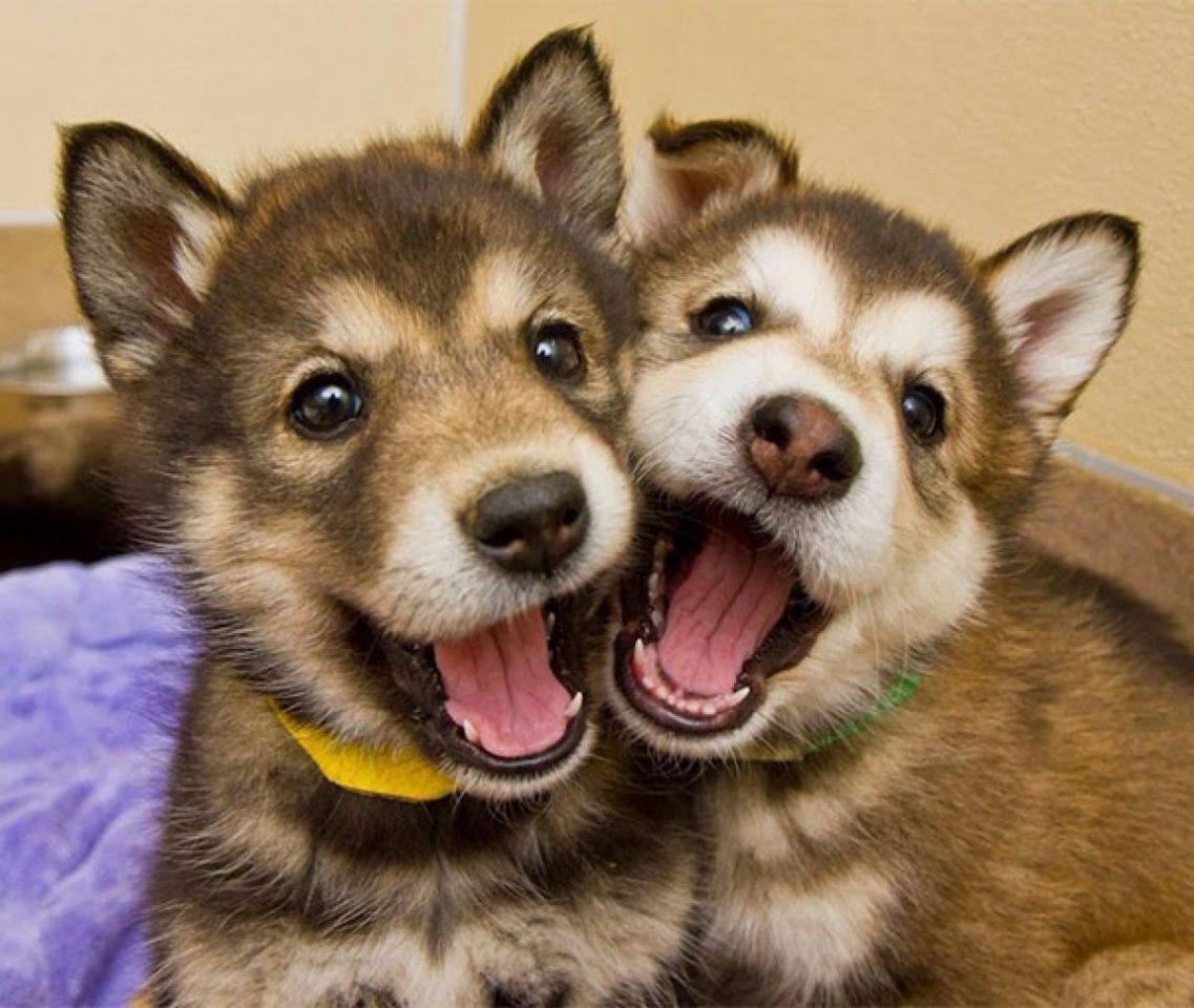 Самые красивые картинки животных новинки кто звонил