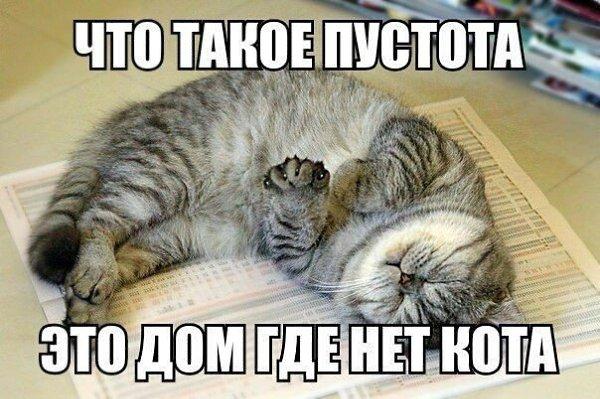 Без кота и жизнь не та - 6 апреля 2016 в 20:34