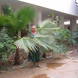 лида, 64 года, Кашира