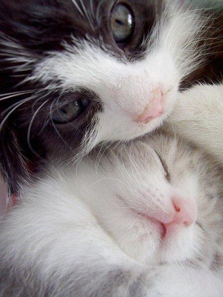 Кошка. Когда-то в осеннюю топкую, мерзлую слякоть. Бежала по улице кошка с котенком в зубах. Увидев ...