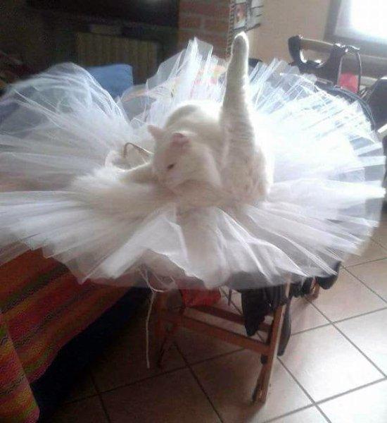 Смешные картинки с балеринами, открытку любимому