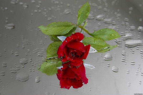 красивая картинка с цветком и слезой имя
