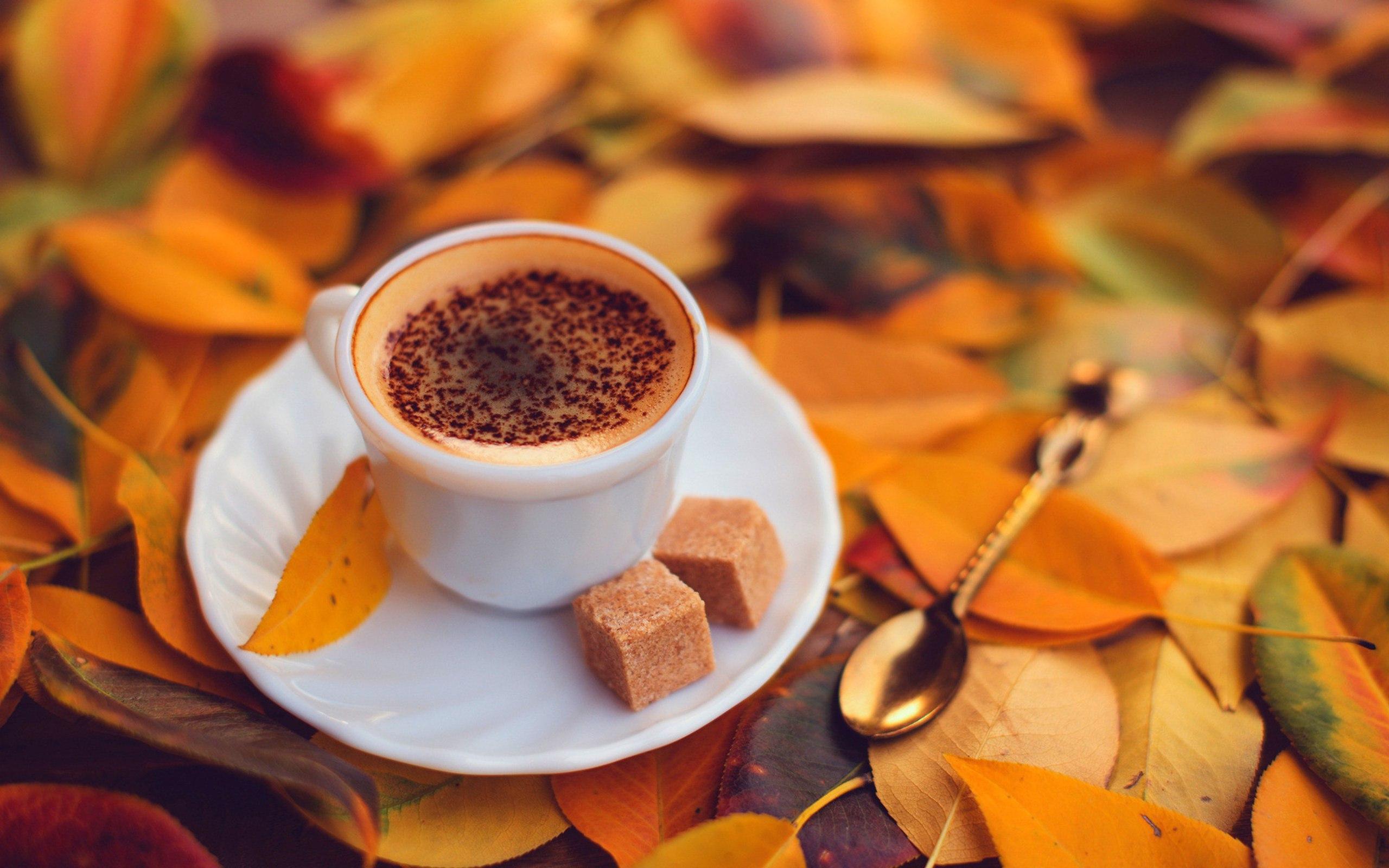 для открытки осеннее утро с кофе приобрести
