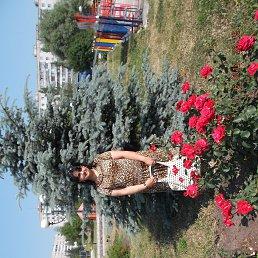 Кристина, 28 лет, Губкин