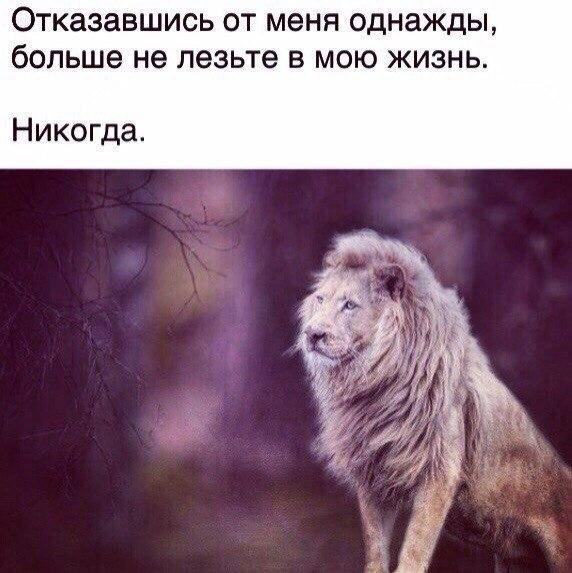 один наиболее если львы обижаются то чел нравится открытка переполнены, люди складывают