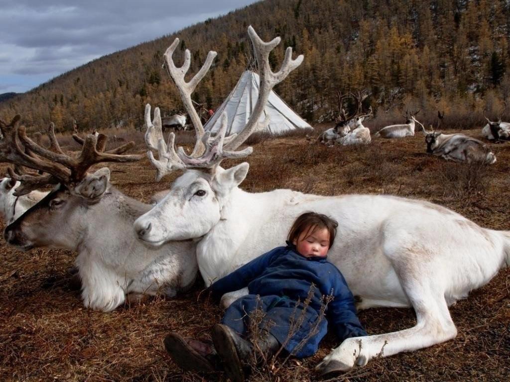металлопрокат все картинки животных якутии словам