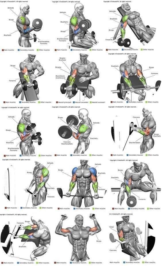 упражнения на отдельные группы мышц с картинками