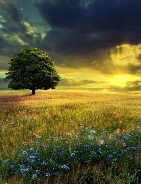 Главное жить. Главное любить. Главное верить..© Лев Толстой