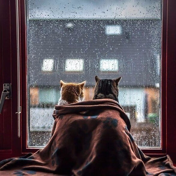 В такую погоду нужно греть друг друга.