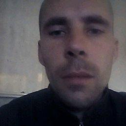 Николай, 29 лет, Шостка