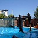 Пицунда-аквапарк, мои любимые дельфины!