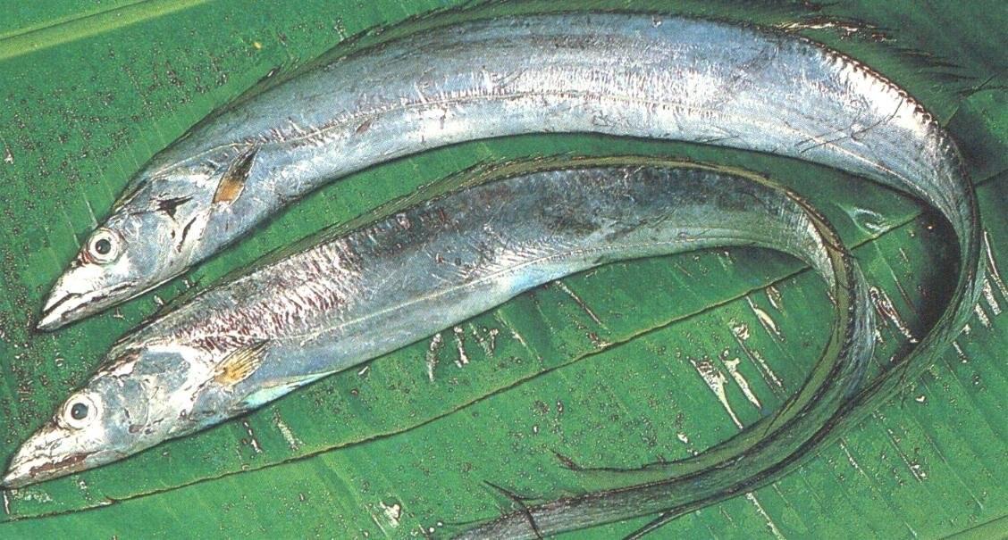 текстура рыба сабля картинки изготовления поджиги