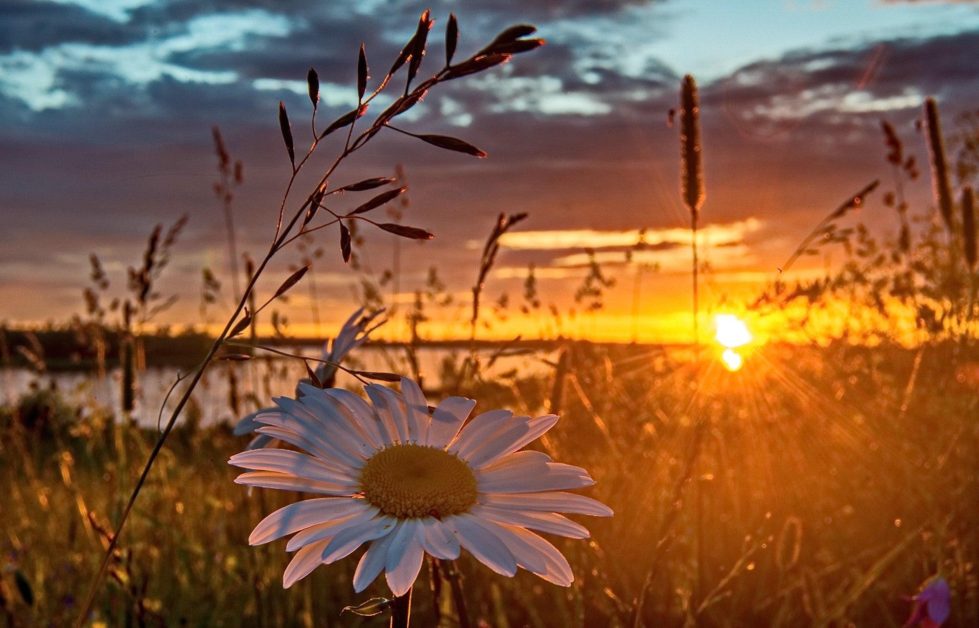 картинки с добрым вечером с видом на солнечное поле ромашек очень