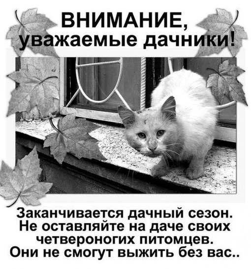 Без кота и жизнь не та - 10 сентября 2018 в 16:29