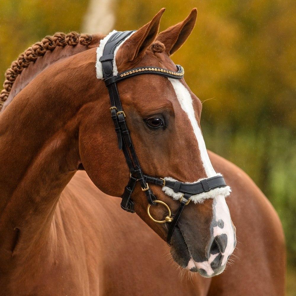 Лошади - это мой мир! - 24 ноября 2018 в 16:41