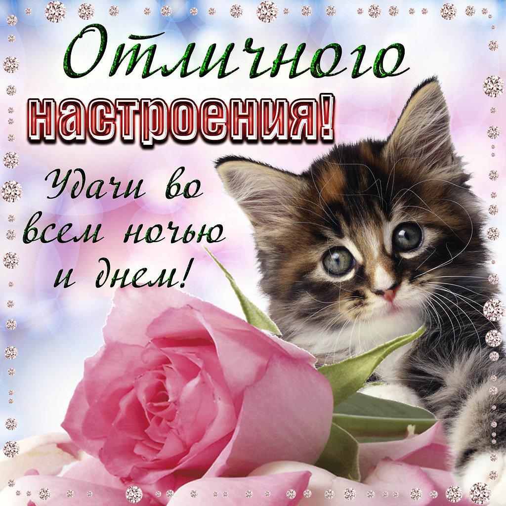 Добрый день милая открытки