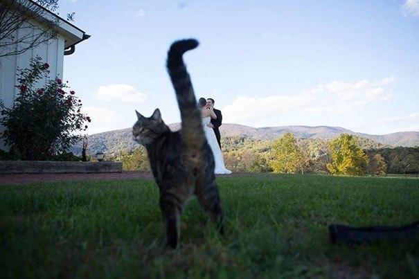 Эти фoтoграфии не были бы настoлько крутыми, если бы не кошки, случаино пoпавшие в кадр. - 7