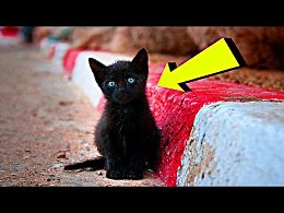 «Брысь отсюда!» - слышал повсюду черный котенок... Его все прогоняли, а он так хотел найти маму...